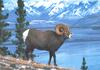 [zFox SWD Animals] Rocky Mountain Bighorn Sheep (Ram)