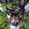[zFox SDC Illustrations IS09] Jack Graber - Deer