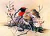 [Flowerchild scan] Eric Shepherd - 2002 Australian Birds Calendar - Red-capped Robin