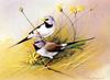 [Flowerchild scan] Eric Shepherd - 2002 Australian Birds Calendar - Long-tailed Finch