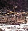 [Fafnir Scan - Walking with Dinosaurs] Coelophysis