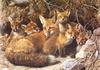[Carl Brenders - Wildlife Paintings] Full House (Red Foxes)