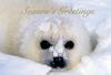 [FlowerChild scans] Christmas Card - Harp Seal pup
