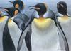 [FlowerChild scans] Painted by Robert Bateman, King Penguins