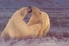 [FlowerChild scans] Painted by Greg Beecham, Polar Attraction (Polar Bears)