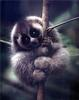 [PhoenixRising Scans - Jungle Book] Slow loris