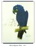 [Ollie Scan] Sketch of Hyacinthine Macaw (1983)