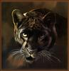 Paintings of Big Cats 2001 Calendar