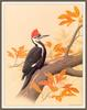 [Woodpeckers by Zimmerman] Pileated Woodpecker