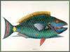 Parrotfish (Family: Scaridae) - Catesby
