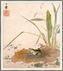 Sheng Hsiang- Frog on a Lotus Leaf (Oriental art)