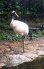 Red-crowned Crane (Grus japonensis) - wiki