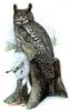 Eagle-Owl / Horned Owl (Genus Bubo) - Wiki