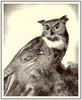 Wengenroth - Great Horned Owl (Art), Bubo virginianus