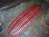 Giant Millipede (Family: Arthropleuridae, Genus: Arthropleura) - Wiki