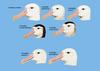 Great Albatrosses (Genus: Diomedea) - Wiki
