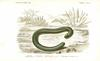 Caecilian (Order: Gymnophiona) - Wiki