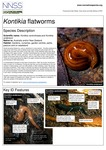 Kontikia flatworms (Page 1)