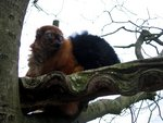 The World's 25 Most Endangered Primates: 2012–2014