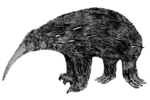 Zaglossus hacketti (giant echidna, extinct)