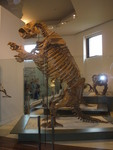 Lestodon armatus (giant ground sloth)