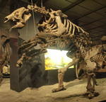 Eremotherium laurillardi (giant ground sloth)