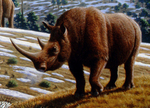 woolly rhinoceros (Coelodonta antiquitatis)