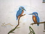 Eurasian kingfisher, common kingfisher (Alcedo atthis)