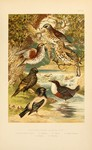 ...rosy starling (Pastor roseus), European starling (Sturnus vulgaris), white-throated dipper (Cinc
