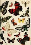 chalk burnet (Zygaena fausta), hornet clearwing (Sesia apiformis), red-striped leafwing (Sideron...
