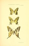 ...common yellow swallowtail (Papilio machaon), southern scarce swallowtail (Iphiclides feisthameli