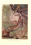 leopard (Panthera pardus): leopards attacking spotted deer (Axis axis)