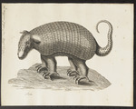 giant armadillo (Priodontes maximus)
