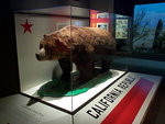 California grizzly bear (Ursus arctos californicus)