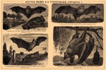 ... parti-coloured bat (Vespertilio murinus), large flying fox (Pteropus vampyrus)