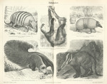 ...nnaeus's two-toed sloth (Choloepus didactylus), Brazilian three-banded armadillo (Tolypeutes tri