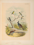 ...oldfinch (Spinus lawrencei), downy woodpecker (Dryobates pubescens), California quail (Callipepl...