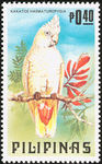 red-vented cockatoo (Cacatua haematuropygia)