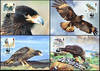Falkland Islands Striated Caracara Set of 4 official Maxicards