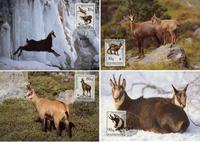 Albania Chamois Set of 4 official Maxicards