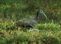 Green Ibis stop - onto Savegre Hotel