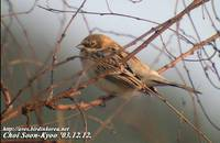 Fig. 1. Pallas's Reed Bunting : 북방검은머리쑥새