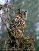 Photo of výr velký Bubo bubo Eagle Owl Uhu