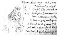 sketch of Tibetan Partridge (and portion of details)