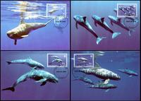 Tuvalu Pygmy Killer Whale Set of 4 official Maxicards