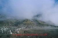 ...FT0133-00: Chinstrap Penguin colony on the steaming slopes of Saunders Is. S. Sandwich Islands.