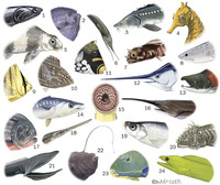 Image of: Actinopterygii (ray-finned fishes), Petromyzontiformes, Chondrichthyes (rays, sharks, ...