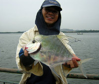Diamond Trevally (Alectis indica)