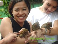photograph of a Philippine tarsier (Tarsius syrichta)