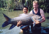 Catlocarpio siamensis, Giant barb: fisheries, aquaculture